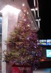 Ustunomiya_tree