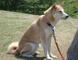 Ninomiya_azumayama_dog