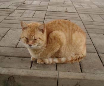 Matsusaka_cat2_2