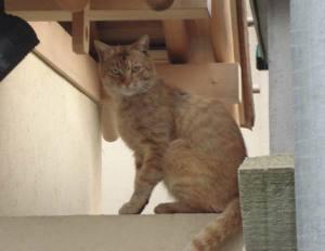 Sengaku_cat