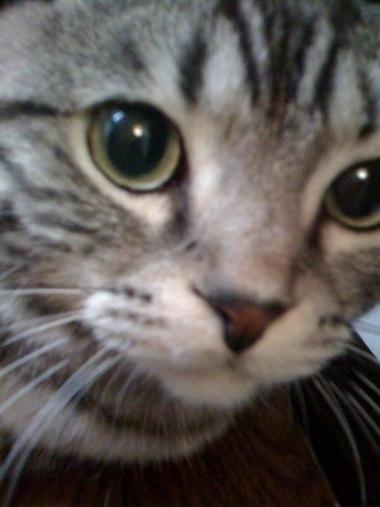 R_cat1_2