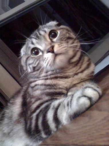 R_cat2