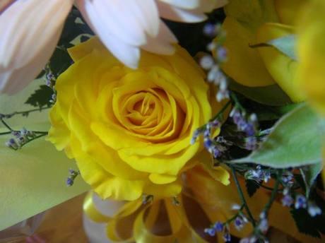 Flower_3jpg