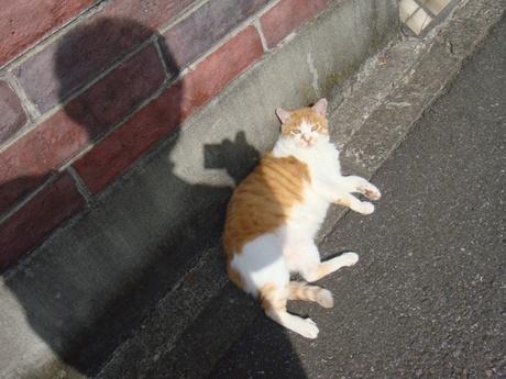 Cat_2