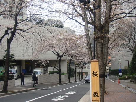 Sakurazaka3