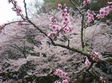 Ninomiya4