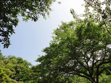Azumayama4