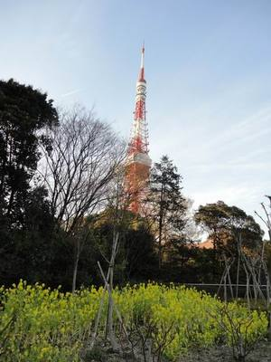 Tokyotower20110318_4