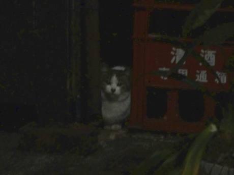 Shiba_cat3