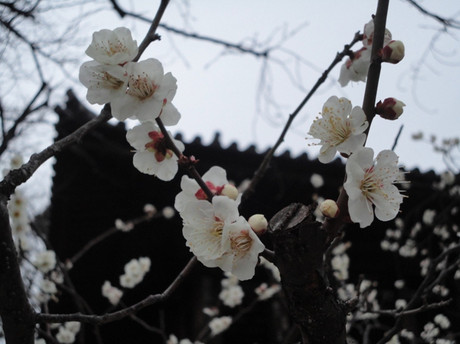 Zojyoji_2