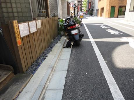 Cat_bike