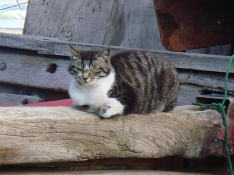 Yamanishi_cats_1