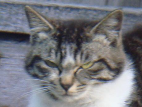 Yamanishi_cats_3_2