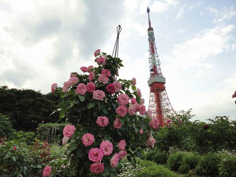 Rose_tokyotower