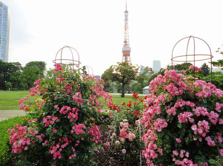 Rose_tokyotower2