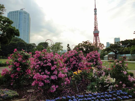 Rose_tokyotower3