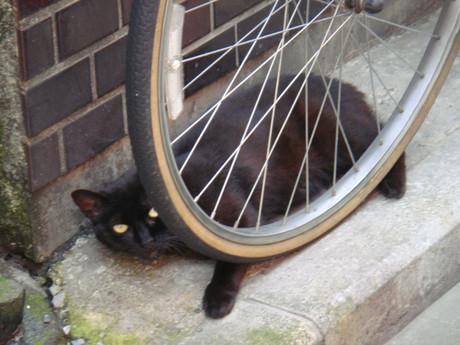 Spork_cat_1