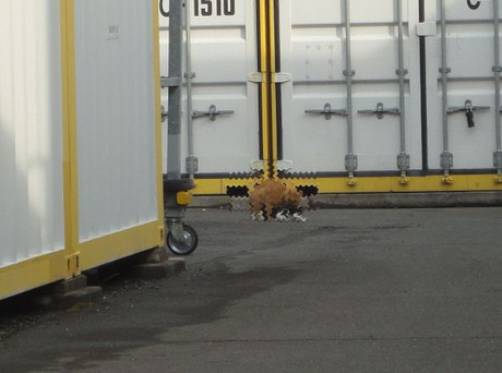 Toda_cats_2_2