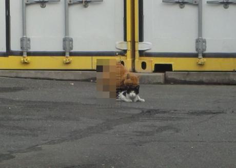 Toda_cats_3