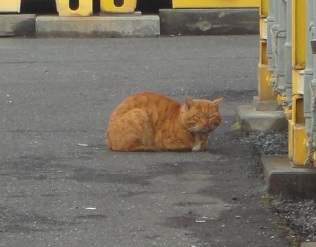 Toda_cats_5