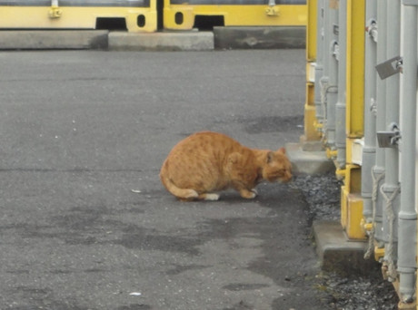 Toda_cats_6