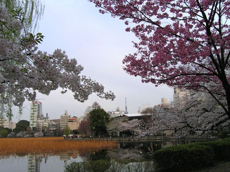 Ueno3