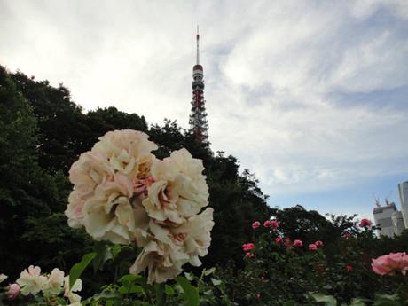 Tokyotower_shiba