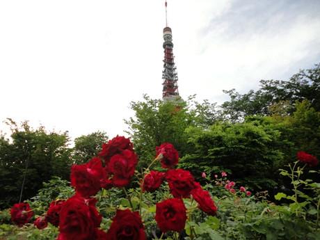 Tokyotower_shiba_2_2