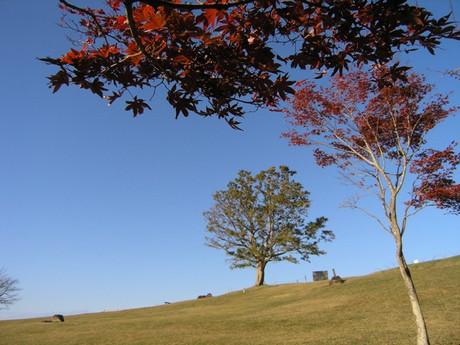 Autumn_azumayama