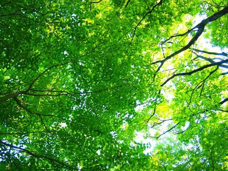 Green_azumayama_1