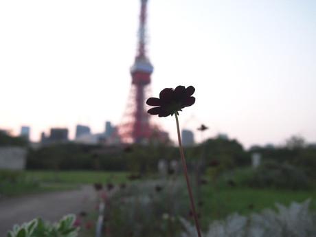 Shibapark_1