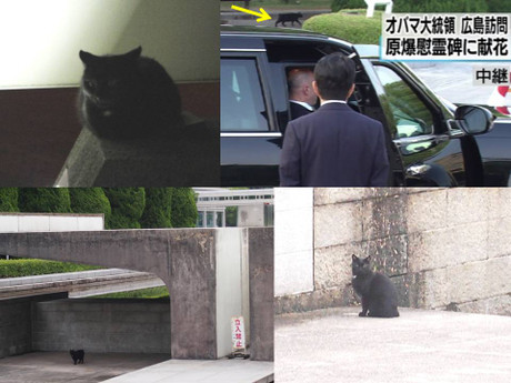 Hiroshima_obama_cat