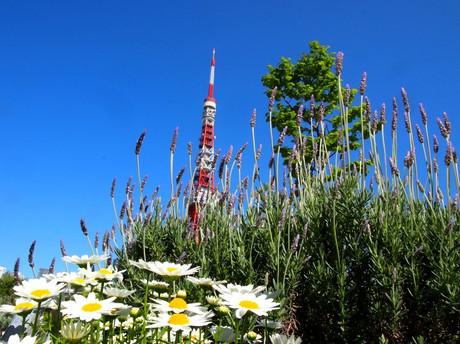 Tokyo_tower_4m