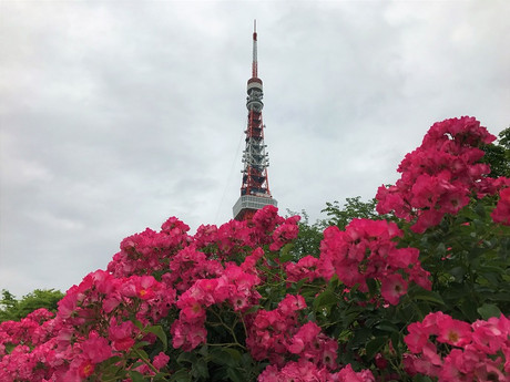 Rose_tower