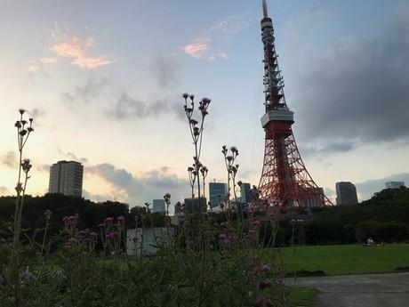 Shiba_tokyo
