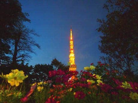 Tokyo_tower_tree_3_2