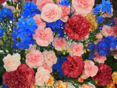 Carnation2