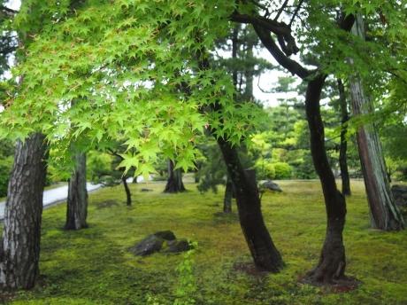 Chisyakuin-06