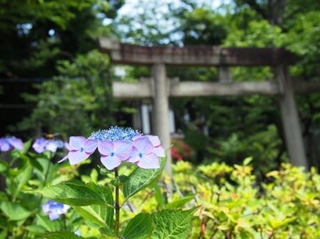 Shinagawa-04